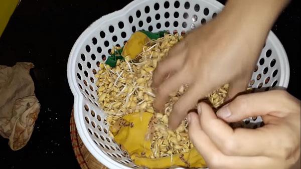 Cách làm mầm đậu nành tại nhà đơn giản