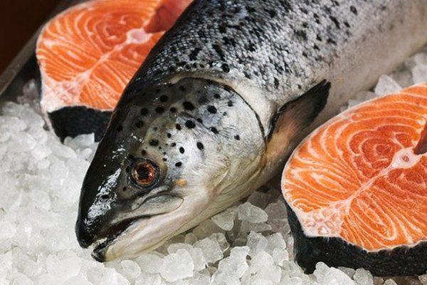 Cá cung cấp vitamin B6