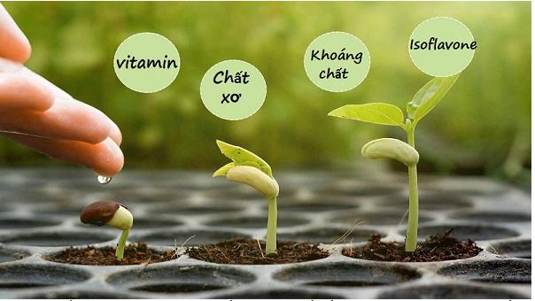 Mầm đậu nành chữa khô hạn