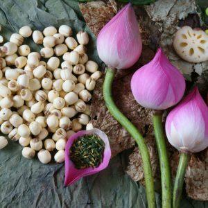 ăn hạt sen có giảm cân không, hạt sen giảm cân, hạt sen có giảm cân không, ăn hạt sen có giảm cân k, hạt sen có tác dụng giảm cân, hạt sen có giúp giảm cân không, ,