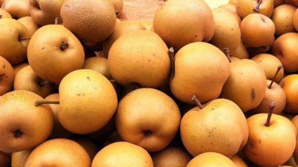 ăn quả mắc cọp có béo không, ăn quả mắc cọp có tác dụng gì, quả mắc cọp, mắc cọp, tác dụng của quả mắc cọp, Ăn quả mắc cọp có giảm cân không