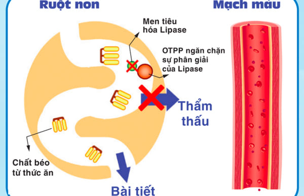 Hợp chất OTPP
